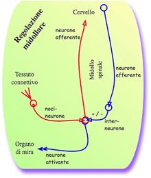 fisiologia del dolore