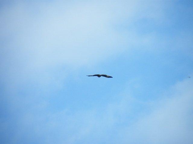 L'aquila vola sopra il luogo del rito